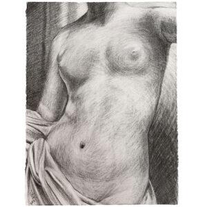 Female torso nude drawing
